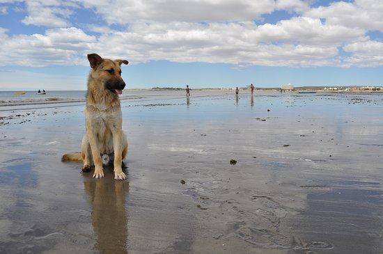 Mi viaje a Puerto Madryn 2011
