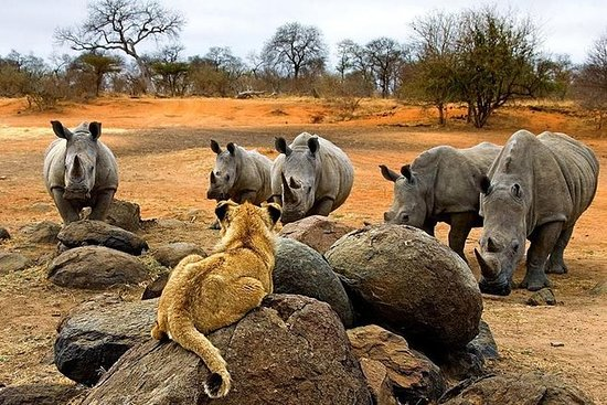 THE 10 BEST Victoria Falls Nature & Wildlife Tours (with