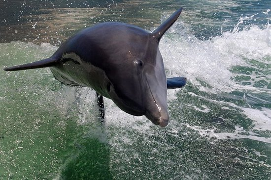 Dolphin Tour & Besøk Shell Key...