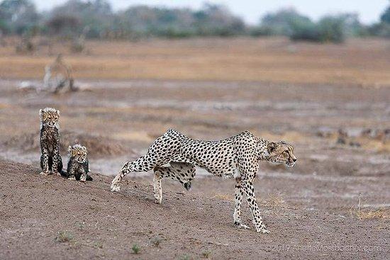 9天加入Safari Tour坦桑尼亚