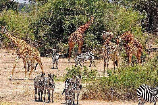 9天加入坦桑尼亚野生动物园游