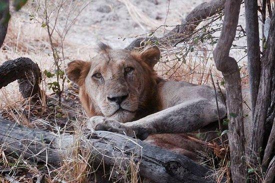 Safaris y Aventuras
