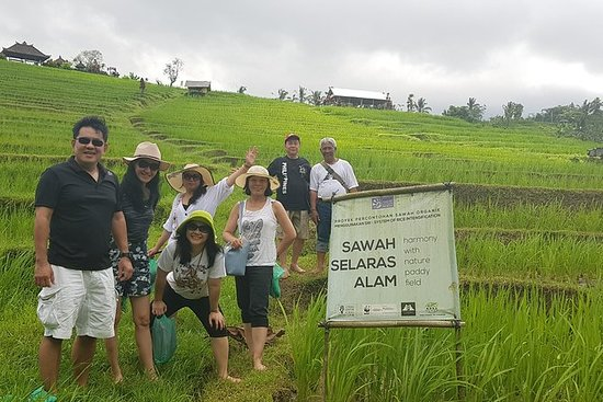 Authentic Balinese Organic Farming...
