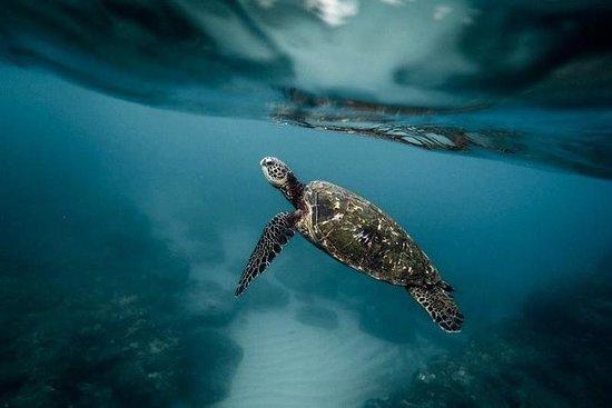 Pescador Island Hopping med Sardine ...