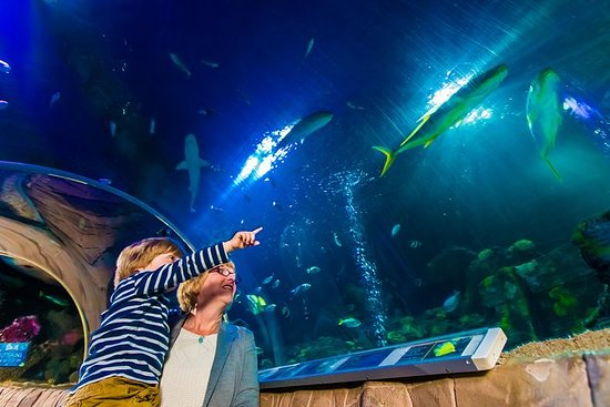 SEA LIFE Hannover Holiday Special...