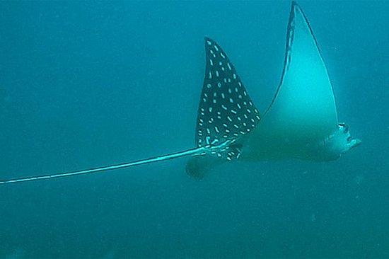 Coral Reef Snorkling med kajakk eller...