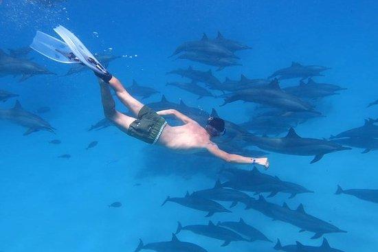 Royal Dolphin House: Dolphin House Royal Sea Trip – Hurghada
