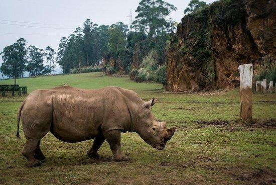 Transport au zoo naturel de Cabarceno...