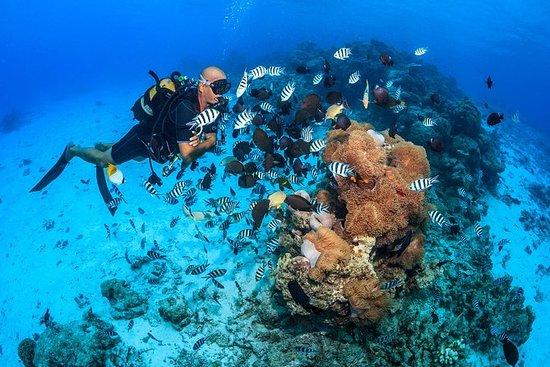 Moorea介紹水肺潛水