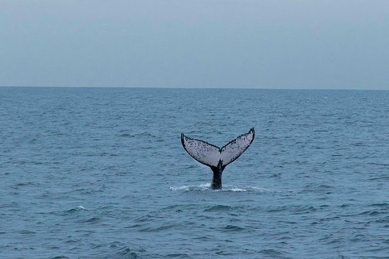 Panama Whale Watching - For grupper...