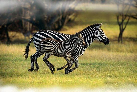 7 dager Samburu, Mt. Kenya, Lake...
