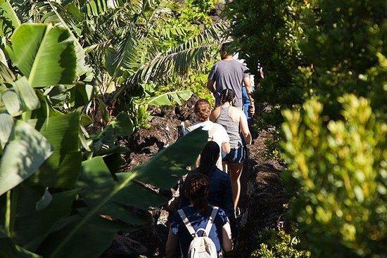 香蕉之旅,Pico全日游,Faial岛的往返旅行