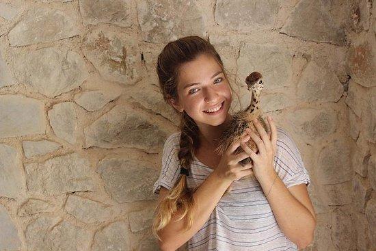罗得岛宠物动物园的法玛