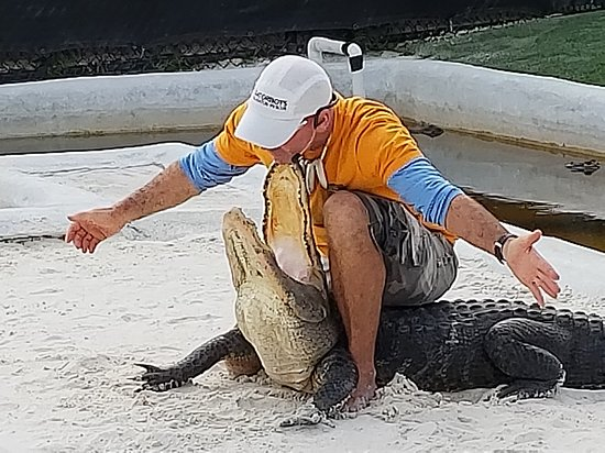 Southwest Ranches, FL: Alligator life Show