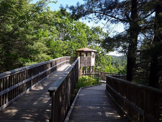 Algonquin Park Region, แคนาดา: Spruce Bog trail