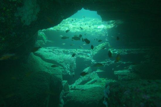 PADI Diving Baptism: Te hacen encontrar rincones increíbles.