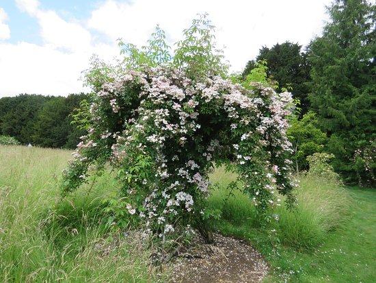 Easton Walled Gardens: Rose