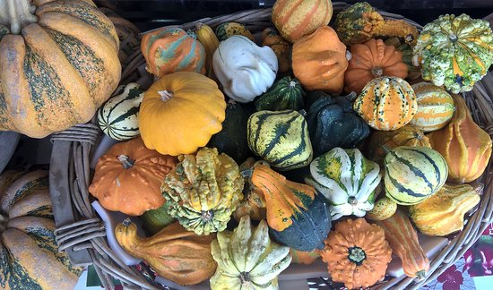 Incredibile collezione di zucche, coltivata a Gonzaga. :)