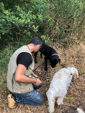 Siena Truffle-Hunting Experience: Truffels