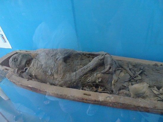 Odessa Archaeological Museum : eksponat  Archaeological Museum