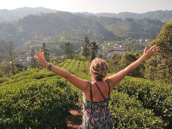 Jiajiang County, China: Tea Terraces Experience