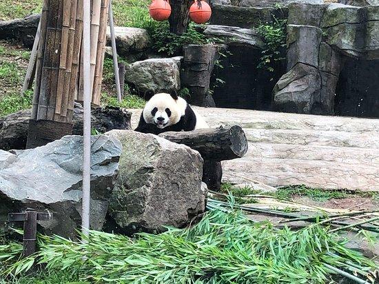 China Highlights Panda Keeper: Say hi to panda!