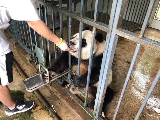 China Highlights Panda Keeper: Feed the panda!
