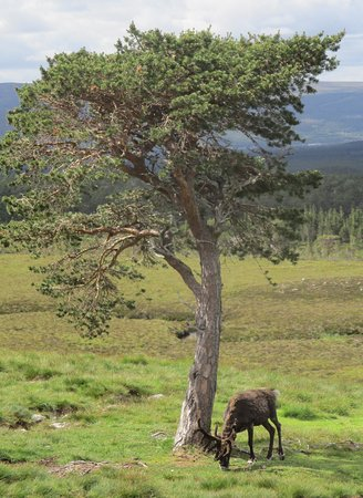 Fraoch Lodge: don't miss the chance to meet the reindeers near by