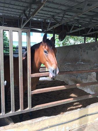 Sabandar Cowboy Town Tuaran, Kota Kinabalu, Sabah