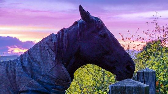 Ednovean Farm: Sonnenuntergang mit einem der Pferde