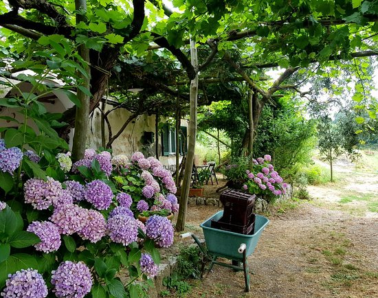 Agriturismo Le Tore Prices B B Reviews Massa Lubrense