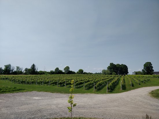 Little Red Wagon Winery