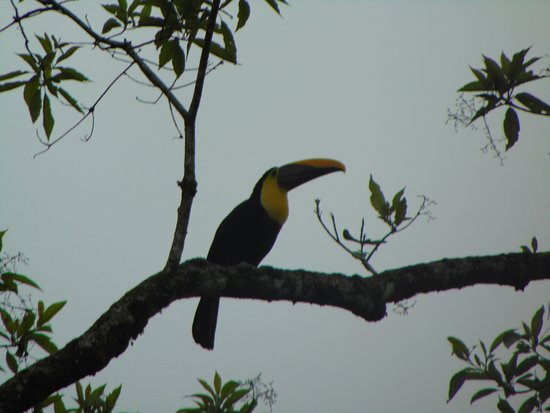Chachagua, Costa Rica: Lots of different birds on the property.