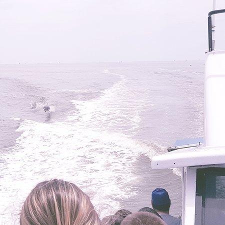 Dolphin enjoying the boat's wake.