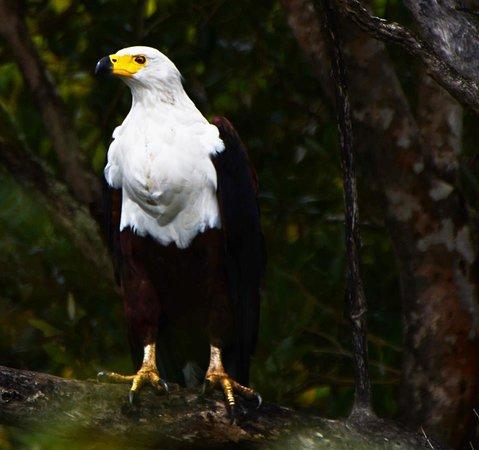 Zululand, Sudáfrica: Birding tours