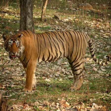 Ranthambore National Park (Sawai Madhopur) - 2019 What to Know