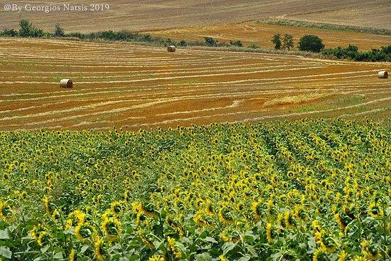 Serres Region, Yunanistan: αχυρόμπαλες
