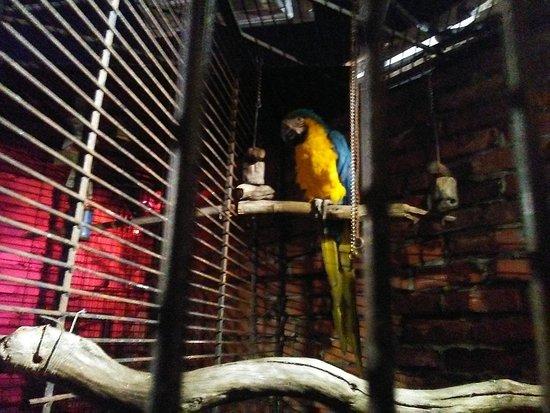 Mozambique Restaurant: The bird
