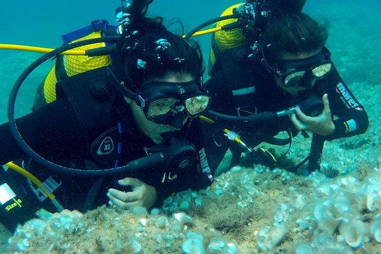 Diving La Casa del Mar