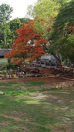 Lazi, الفلبين: fire tree