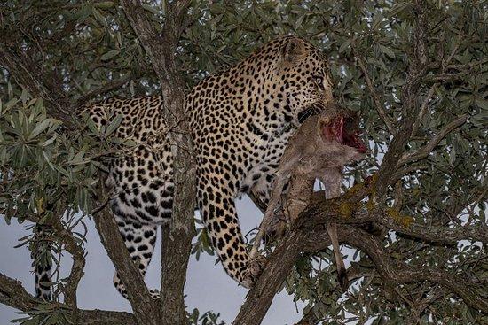 Fantastic Photo Safari