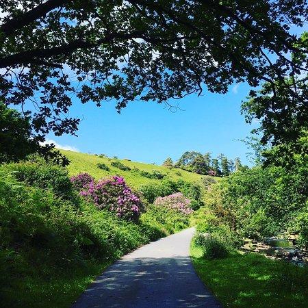 Taylor Made Coffee Van: Our beautiful location, Avon Dam, Dartmoor