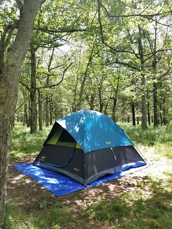 Shaded/sheltered campsite
