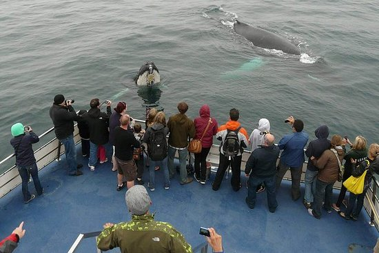 Newfoundland Puffin og Whale Watch...