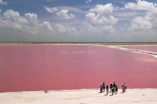 Las Coloradas粉红色的湖泊,Playa del...