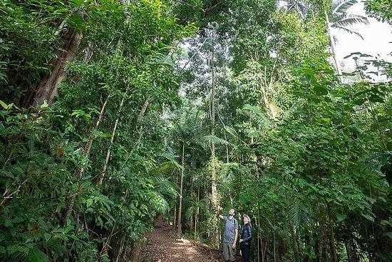 Foresta pluviale tropicale e cascate