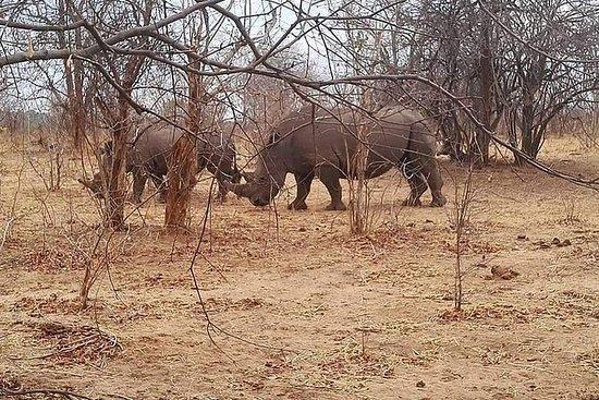 Game Drive und Rhino Walk