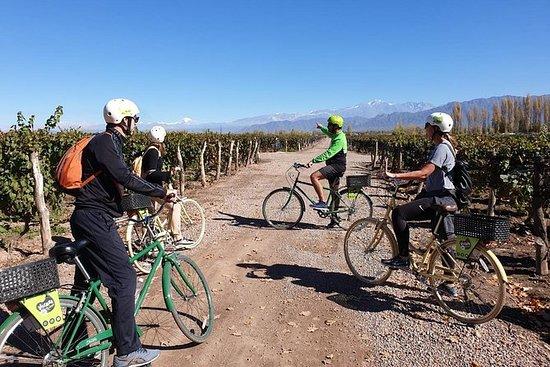 Sykkel, viner og lunsj på Luján de...