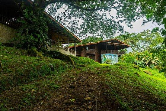 Barnets Evige Rainforest Trekking...