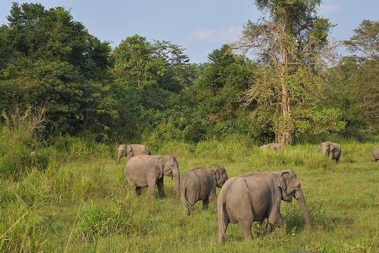 Wildlife Safari Tour i Maduru Oya...